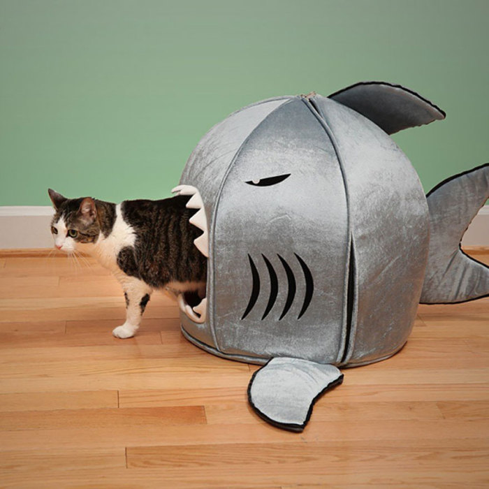 Funny cat in a house for a shark.