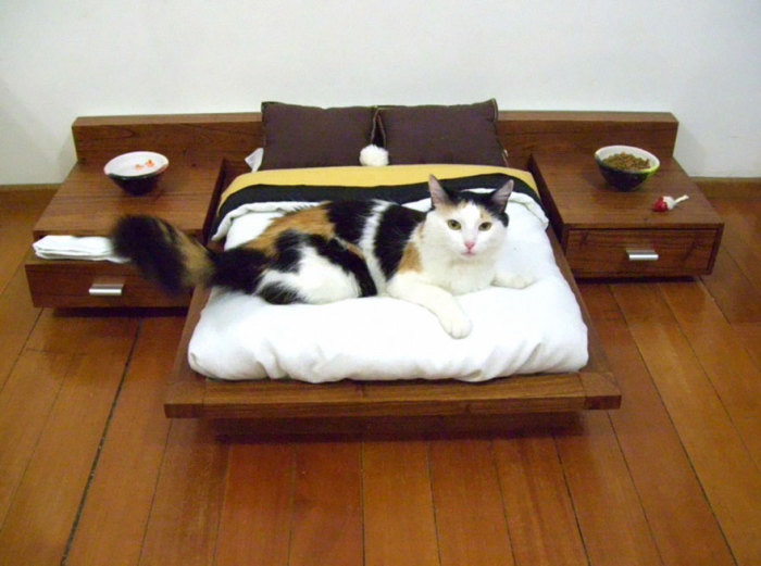 This bed for the cat.
