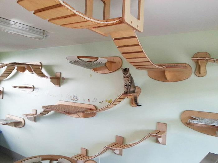 Cat on wall Goldtatze.
