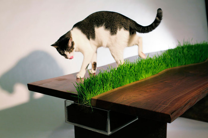Table with a green lawn in the middle of Emily Wettstein.