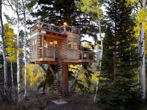 Another amazing Tree House