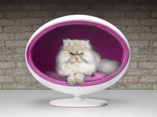 20 Stylish and Cozy New ideas for Cat Beds