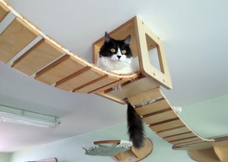 cat-houses 1