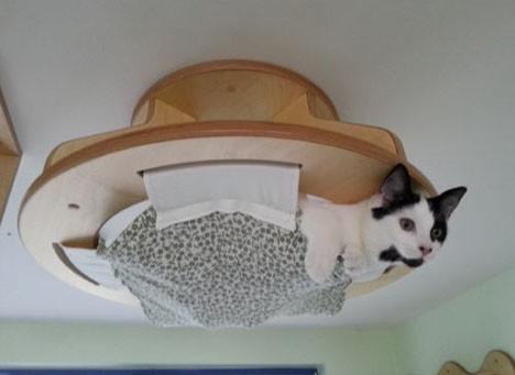 cat-houses 2