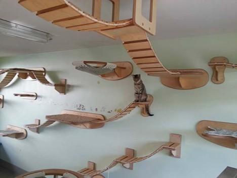 cat-houses 6