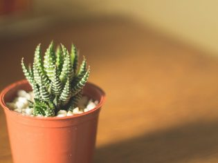The Best Indoor Plants That are Easy to Keep