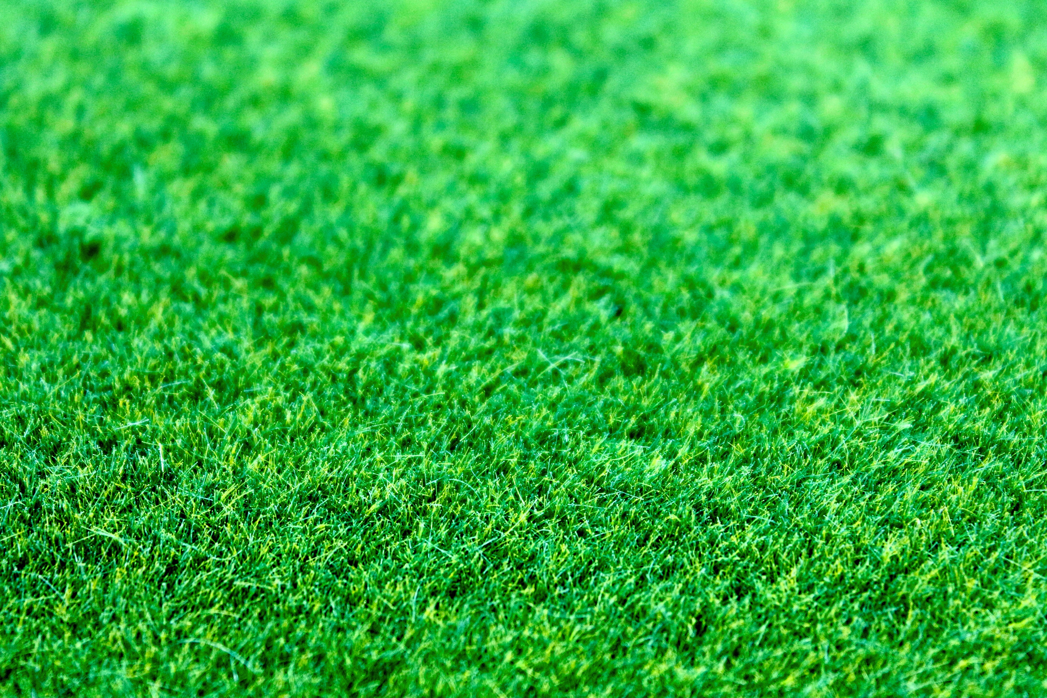 Watering Tips For The Greenest Lawn On The Block